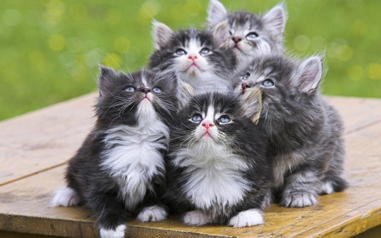 Exceptionally cute kittens waiting for Blend to download. (Image Source: wallpaperswalla.com)